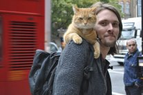 a_street_cat_named_bob-thumb-500x332-153479