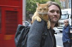 a_street_cat_named_bob-thumb-500x332-153479