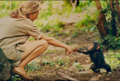 Jane Goodall and infant chimpanzee Flint reach out to touch each other's hands. MUST CREDIT: Hugo van Lawick, National Geographic Creative-Abramorama